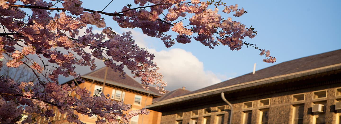 Flowers of tree  in bloom in front of Goldwin Smith Hall